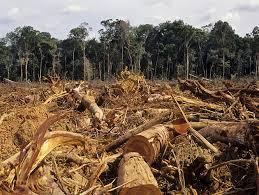 Image result for palm oil deforestation