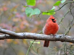 Bird Feeding And FoodsBackyard Bird Watch