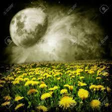 Image result for dandelion dreams image