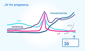 Chart Of Menstrual Cycle Hormones Menstrual Cycles And Ovulation Clearblue