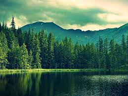 Mountain Green Forest Deep Sea ...