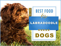 Canidae Dog Food Feeding Chart 7 Best Foods To Feed An Adult And Puppy Labradoodle With
