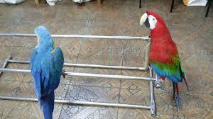 <b>Попугаи ара</b>.Филя и Гоша.Пока присадки в чистке-придумали ...