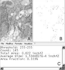 Formato Au 12 Stromal Cell From Human Fresh Cortical Ovarian Tissue