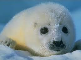 Персональный сайт Охрана и рациональное использование животного мира Пользование животным миром осуществляется посредством изъятия объектов животного мира из среды их обитания либо без такового