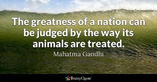 Animal House Quotes Stunning Animals Quotes BrainyQuote