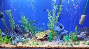 Free Download Aquarium Backgrounds Printable Fish Tank