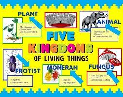 Make A Science Fair Project Poster Ideas Five Kingdoms