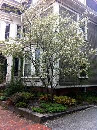 small flowering trees a dozen native