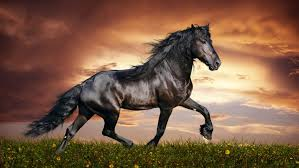 high resolution widescreen desktop wallpaper. Beautiful Resolution Arabian Black Horse Widescreen Images High Resolution Desktop Wallpapers Hd On Wallpaper P