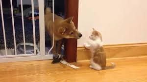 puppy and kitten fighting. Fine Kitten And Puppy Kitten Fighting P