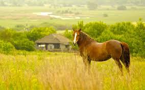 23086 Free Desktop Backgrounds Horses