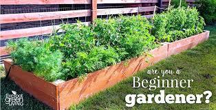 beginner gardening. Gardening For Beginners The Best Vegetables Beginning Vegetable Tips . Beginner