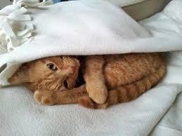 Risultati immagini per commenti belli sui gatti e immagini buffe