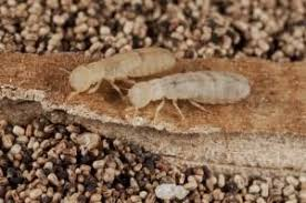 Image result for termite control