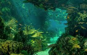 Wallpaper underwater, ocean, fish ...