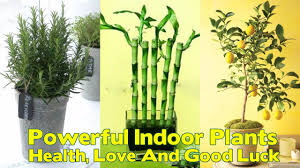cool office plants. 12 Powerful Indoor Plants That Are Known To Bring You Good Health, Love And Luck Cool Office