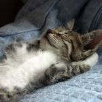 sleeping cat Meme Generator - Imgflip via Relatably.com