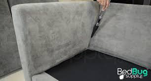 vacuuming a sofa for bed bugs