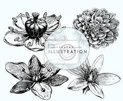 Fototapeta Sada Vinobraní Květiny Návrhy Tetování