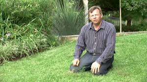 how to kill weeds in garden. killing and keeping weeds out of your lawn how to kill in garden