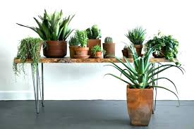 large indoor plant pots large indoor plants large indoor plant pots indoor plants with terracotta pots
