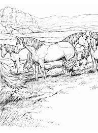 Kleurplaat Wilde Paarden In Een Landschap Kleurplaatjecom