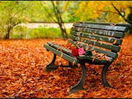 Small Picture Misc Fall Beautiful Garden Leaves Autumn Park Bench Background