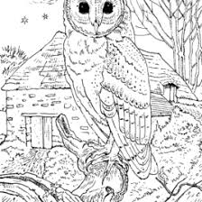 Small Picture Barn Owl Colouring Page The Barn Owl Trust Colourings To Print In