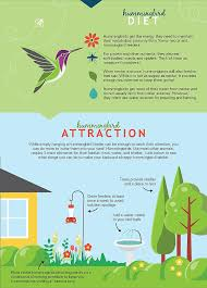 Small Picture Best 25 Hummingbird migration ideas on Pinterest Attracting