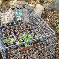 diy wire mesh plant er to keep the