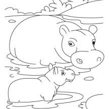 Small Picture Baby Hippo Mom Hippo Coloring Coloring Pages