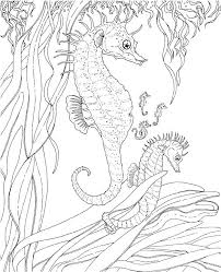 Ocean Coloring Pages Ocean Coloring Pictures Sea Creatures Coloring