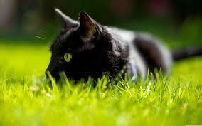 cat with green eyes hd wide wallpaper for 4k uhd widescreen desktop smartphone