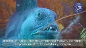 Норвегия. <b>Подводный мир</b>. - YouTube