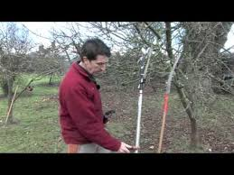 How To Prune Young Fruit Trees  YouTubePruning Fruit Trees Video