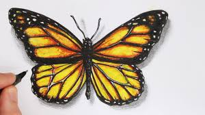 drawing butterfly pictures. Brilliant Drawing And Drawing Butterfly Pictures E
