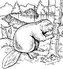 Beaver Color Page Floral Coloring Books Animal Coloring Pages
