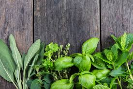 how to grow a herb garden. How To Grow Herbs Indoors 40545079 Fresh From Garden On Wooden Rustic Background A Herb