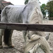 Paard Zoekt Baas Paardenopvang Home Facebook