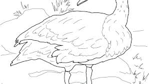 lake coloring pages page swan in the free printable colouring princess to print for kids