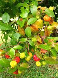 Multi Grafted Fruit Trees  Stark Brou0027s Custom Graft Fruit TreesFruit Salad Trees Usa