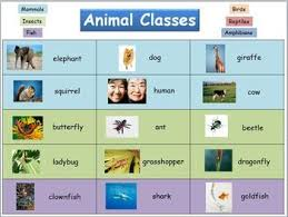 Animal Classes Reference Chart First Grade Science