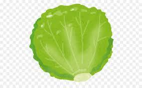 lettuce clipart. Perfect Lettuce Red Leaf Lettuce Food Vegetable Nutrition  Clipart Inside Lettuce Clipart T