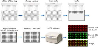 Frontiers A High Throughput Assay For Screening Host Restriction