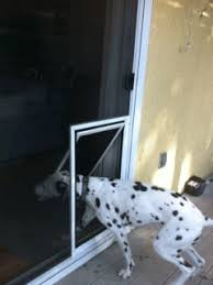 exterior back door with dog door. love the idea of a pet door installed in screen rather than itself exterior back with dog e
