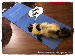 90.000 stichwörter und wendungen sowie 120.000 übersetzungen. Sportliche Katze Hometrainig Zu Zweit Buchstabenmeer