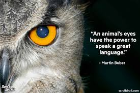 These Quotes From Famous People Will Encourage You To Love Animals
