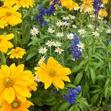 Garden Plants U0026 Flowers