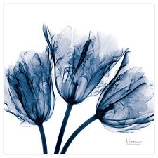 blue tulip x ray flower wall art